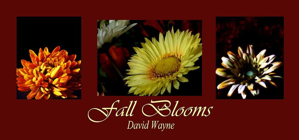 Fall Blooms by David W Kirk