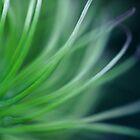 Whispy Swirl by Debbie Stobbart
