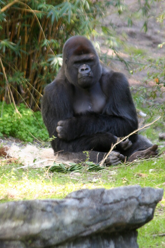 King of the Apes by hbryson