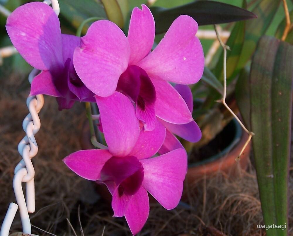 Orchid by wayatsagi