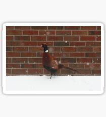 Pheasant In The Snow Sticker