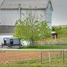 An Amish Farm by Dyle Warren