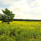 FIELD OF GOLDENROD by Sharon A. Henson