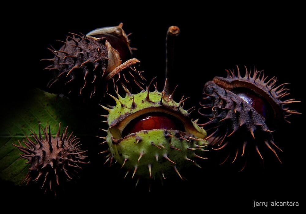 Conker (Horse Chestnuts) by jerry  alcantara