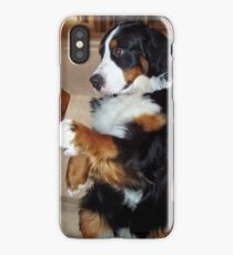 bernese mountain dog begging iPhone Case/Skin