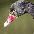 Black Swan by Trevor Kersley