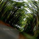 """""""In a Spin"""" by Bradley Shawn  Rabon"""