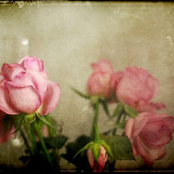 Textured pink roses by owmyhands