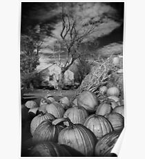 Pumpkin Patch Hwy14 Poster