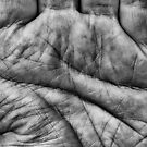 Palm of a hand, left hand by Pekka Nikrus