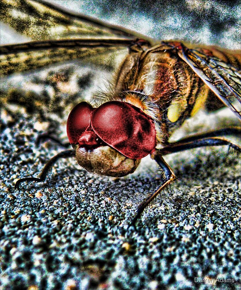Digifly by Darren Adams