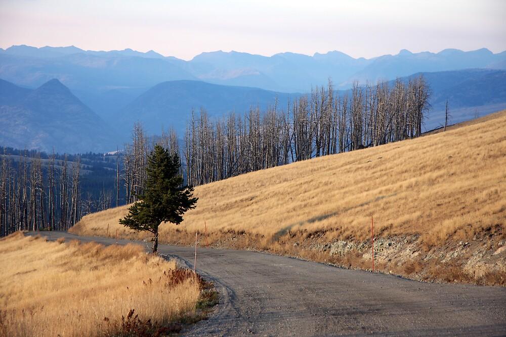 Mt. Washburn by noffi