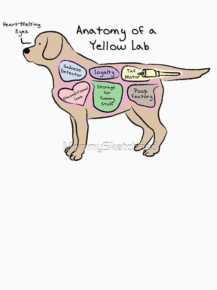 Anatomy of a Yellow Lab by MommySketchpad