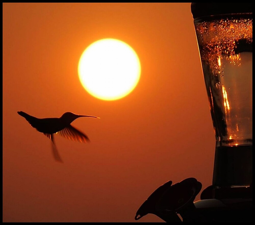 Silhouette of a Hummingbird by Karen Keaton
