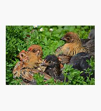 Birds of a feather... Photographic Print