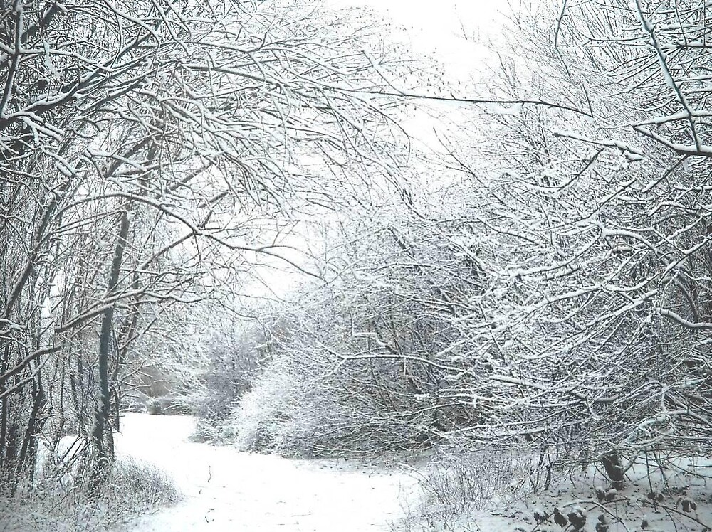 Cold but beautiful snow by kimie
