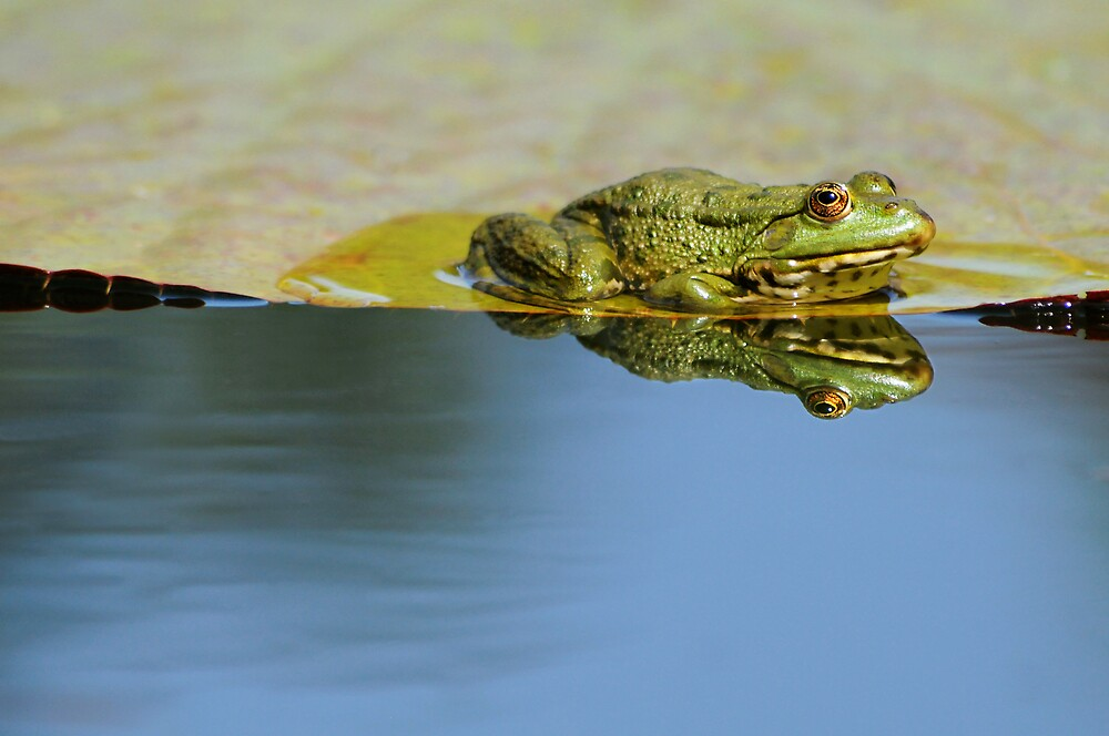 frog in the mirror by mc27