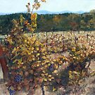 Vineyard Lucchesi by Randy Sprout