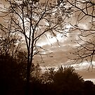 Angry Sky (Sepia) by Robin Webster