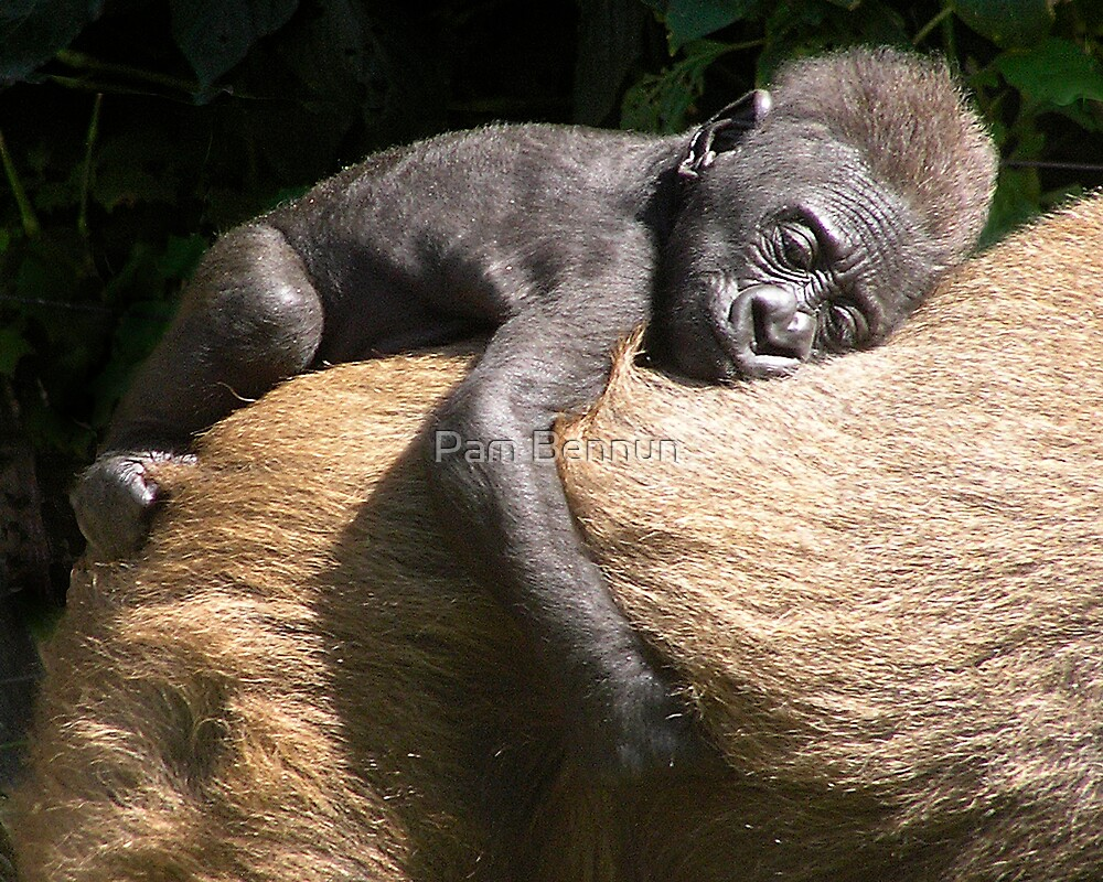Gorilla Love by Pam Bennun