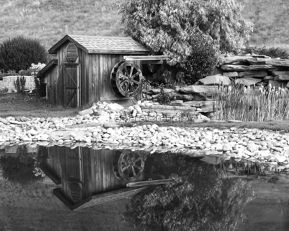 Tranquil reflections by Tamara Brandy