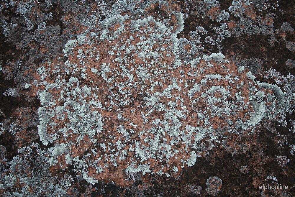 Lichen texture 3 by elphonline