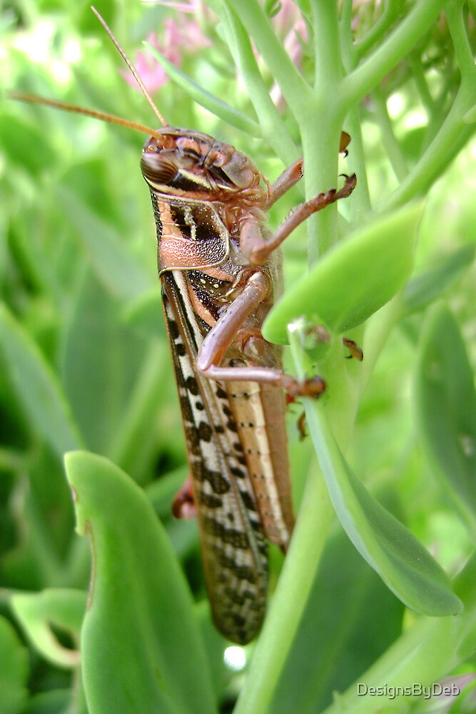 Grasshopper by DesignsByDeb