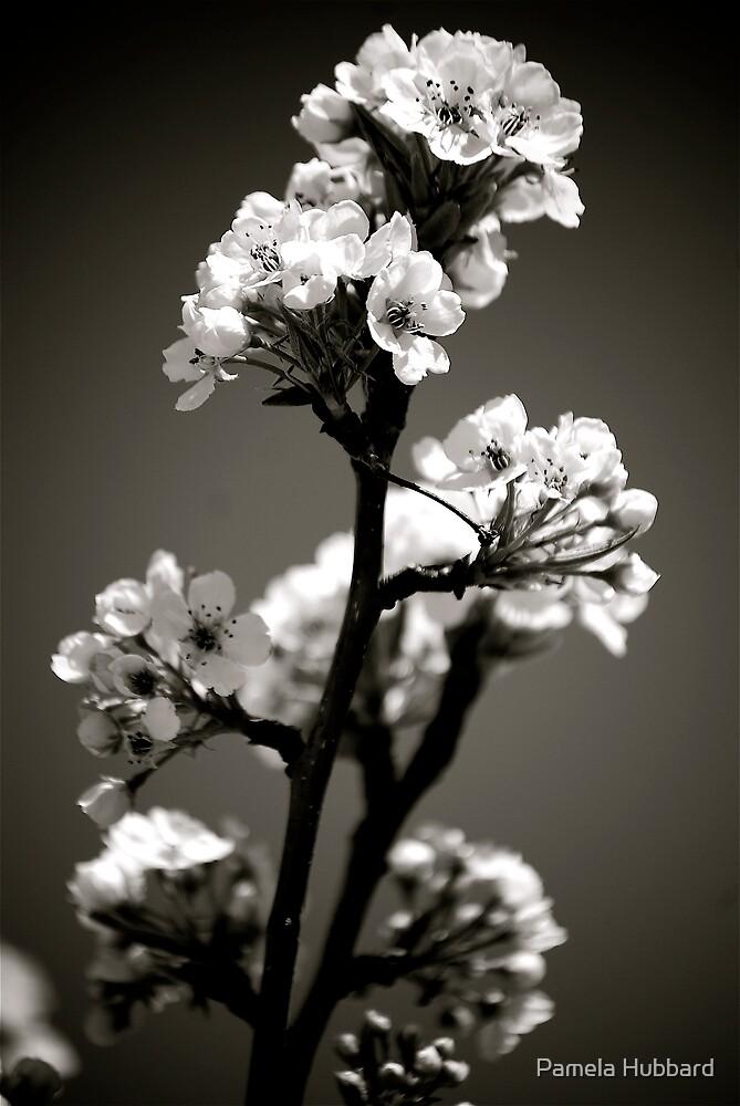 Blossom by Pamela Hubbard