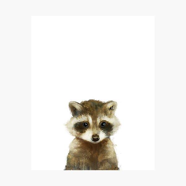 Little Raccoon Photographic Print