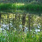 Pond Reflections by barnsis