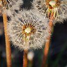 Three Wishes by Pamela Hubbard