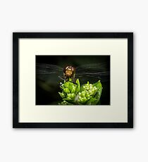 Macro Closeup Dragonfly Framed Print