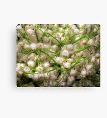 Lilies of the valley 4 Canvas Print