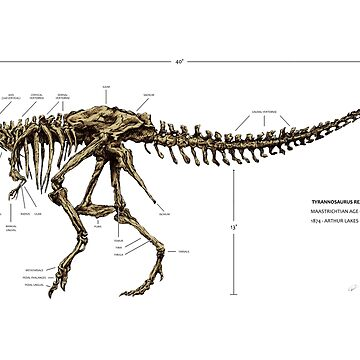 T-Rex Skeleton  by SPearsons