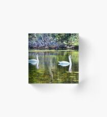 Swans At The Lake Acrylic Block