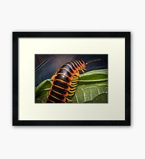 Orange Millipede Leaf Framed Print