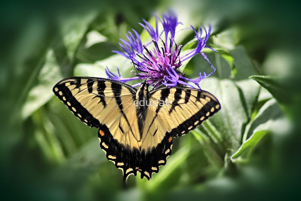 Beautiful Butterfly by cdudak