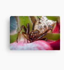 Spined Micrathena Spider Canvas Print