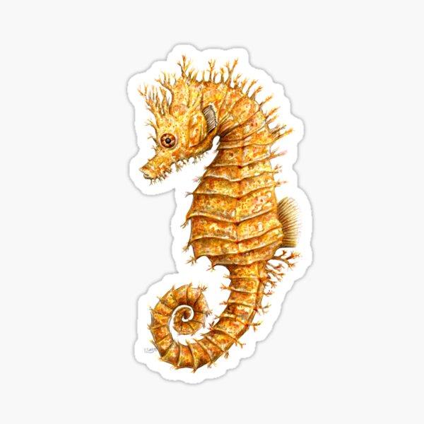 Schöner gemeiner Seepferd Hippocampus hippocampus Sticker