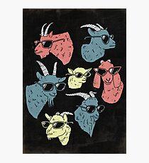 Goats Photographic Print