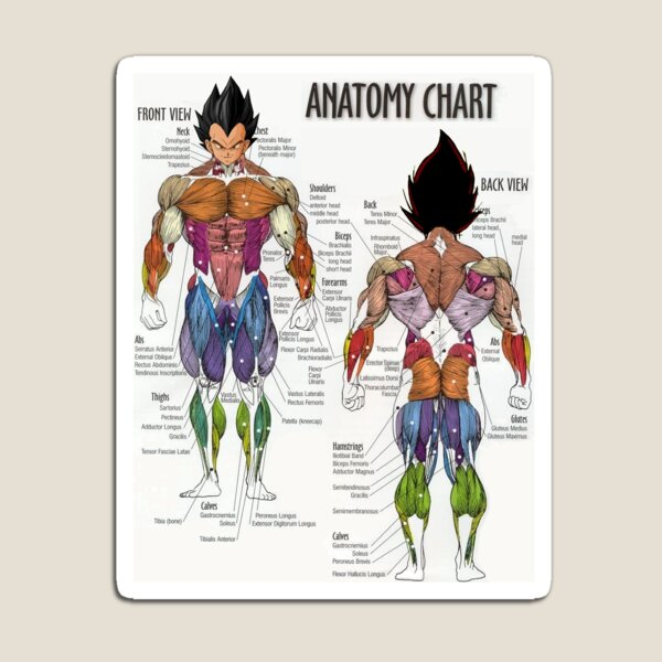 Saiyan Anatomy Chart Imán