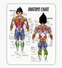 Saiyan Anatomy Chart Sticker