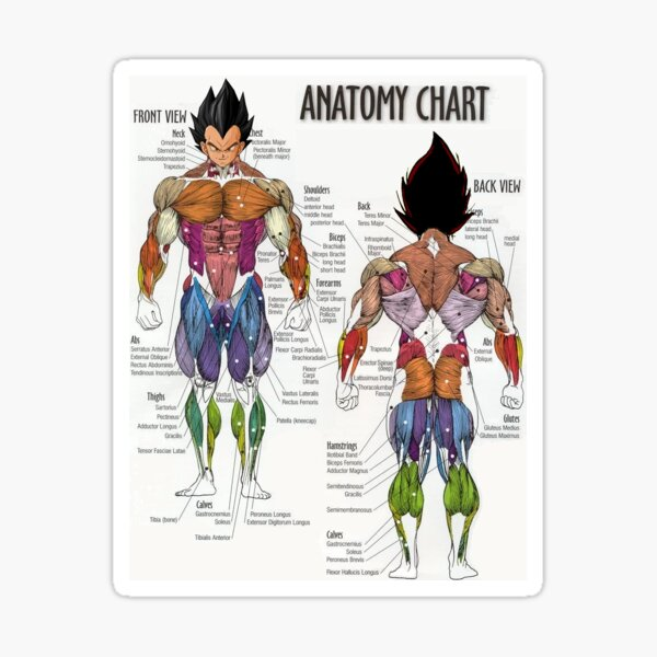 Saiyan Anatomy Chart Pegatina