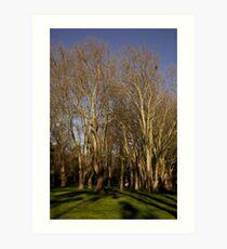 Fitzroy gardens Art Print