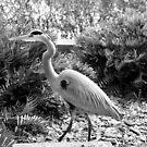 heron  by LeonidasBratini