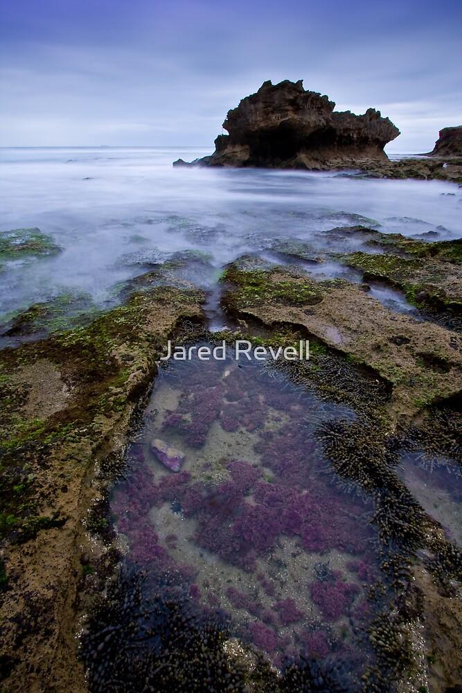 Purple Haze by Jared Revell