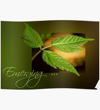 Emerging . . . Poster