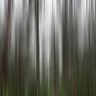 Dandenong Ranges - Colour Aspect 1 by Sue Wickham