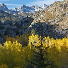Early Morning Side light bishop Fall 2017 by photosbyflood