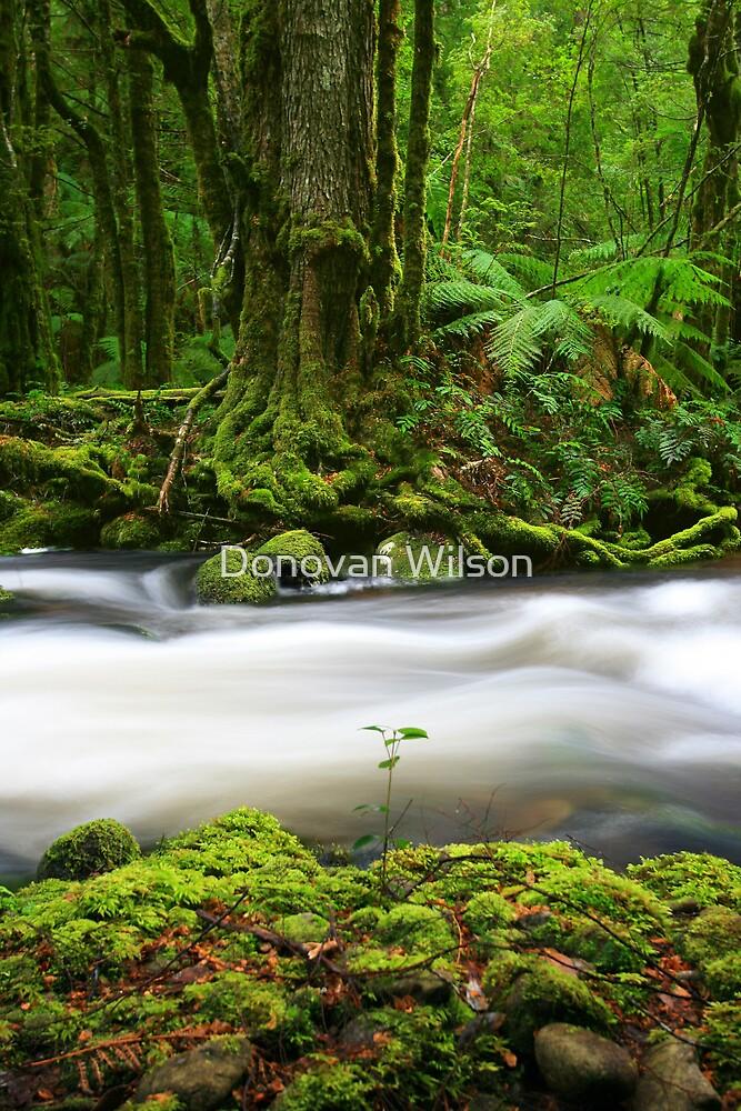 green river  by Donovan Wilson